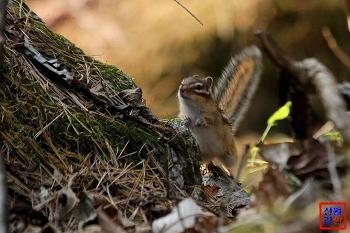 숲속의 요정, 귀요미 다람쥐는 사진모델(순간포착)