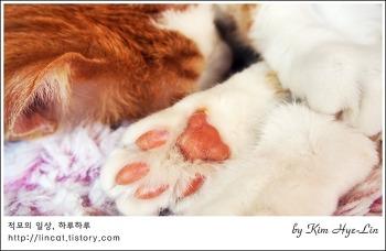 [적묘의 고양이]발렌타인 데이, 가장 큰 선물, 남자라면 핫핑크~