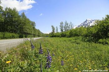 """알래스카 """" portage valley 의 빙하 """""""
