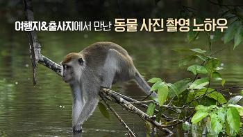 여행지 / 출사지에서 만난 동물 사진 잘 찍는 방법 (야생동물 / 동물촬영)