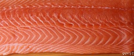 슈퍼푸드 연어의 새빨간 이야기, 선홍색 살코기는 기획된 것