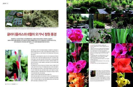 글라디올러스와 8월의 오가닉 정원풍경(월간 기고글)