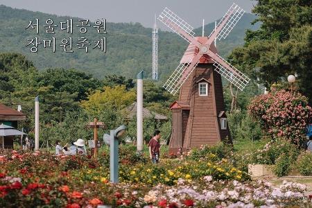 [장미축제] 서울대공원 장미원축제