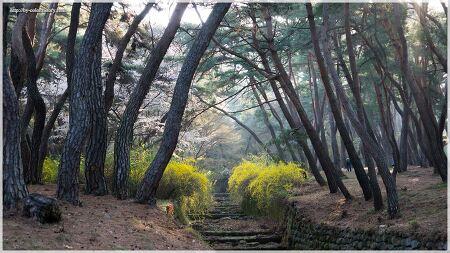 경주 삼릉, 그리고 불국사의 봄