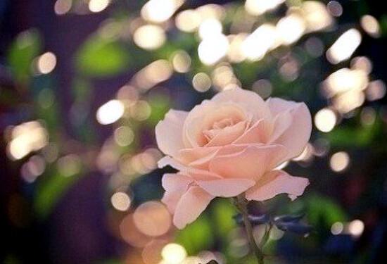 내 가슴속의 꽃도 피어나긴 할까.