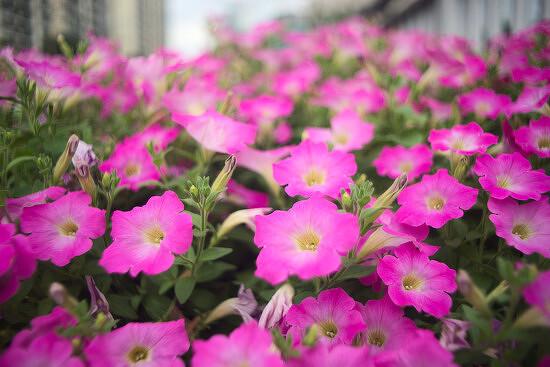 펜타콘 29mm f/2.8 MC 렌즈로 찍은 예제 사진들.