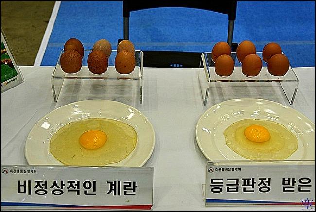 계란 품질 등급 (중량,규격) , 좋은 계란 구별법
