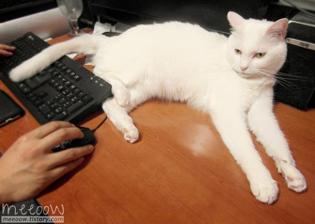 묘생인생 굿즈를 만드는 동안 고양이들은...