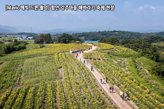 [Mavic 매빅 드론 촬영] 함안 강주마을 해바라기 축제 현장 동영상