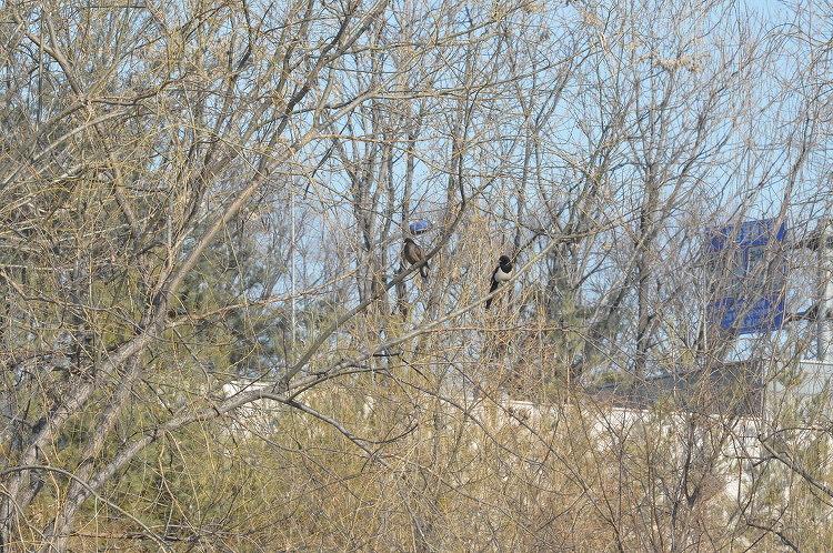 서울숲, 중랑천에는 그들이 살고 있다.