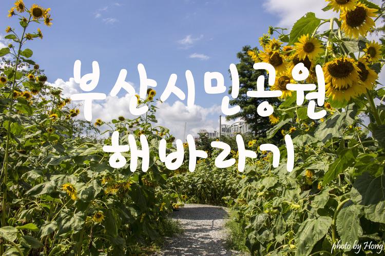 [부산 여행] 부산시민공원에서 즐기는 여름꽃 해바라기