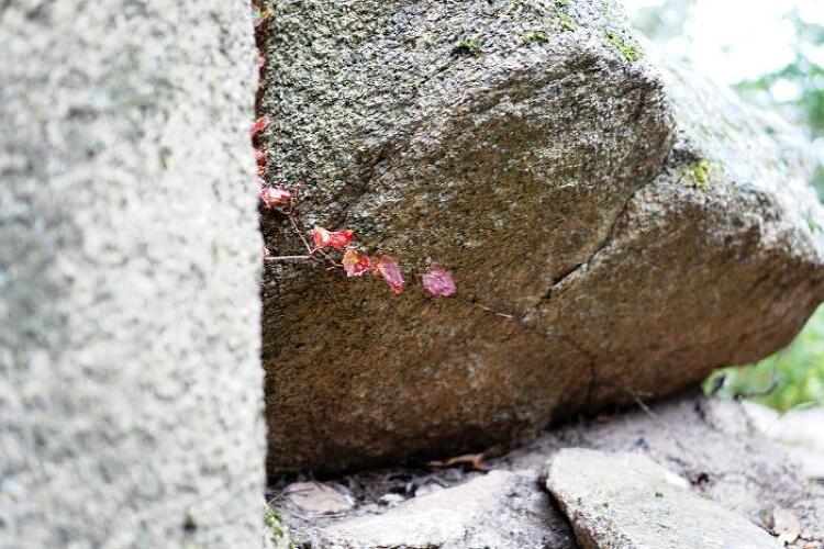 [일요산행] 사패산 도봉산 종주 171001