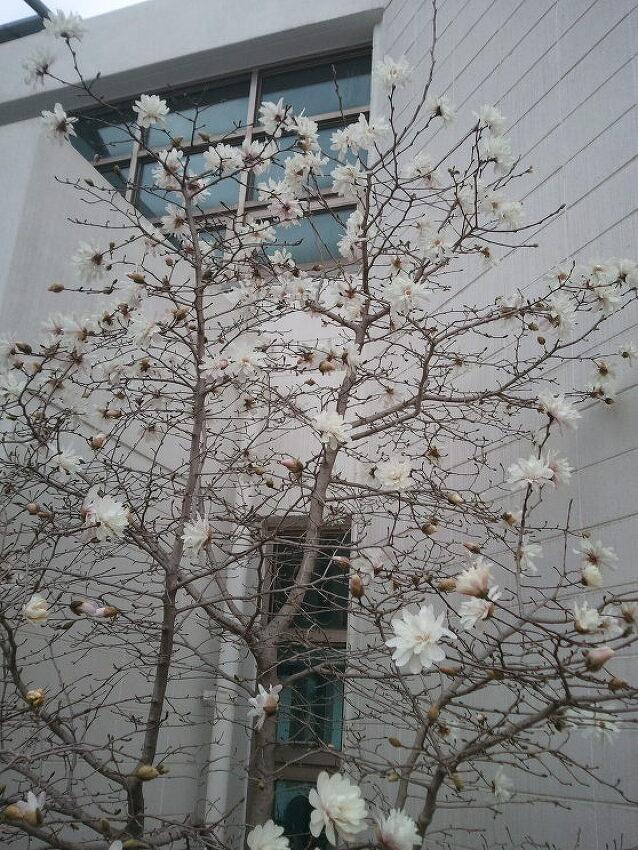 다시 피는 꽃처럼, 다시 오는 봄처럼