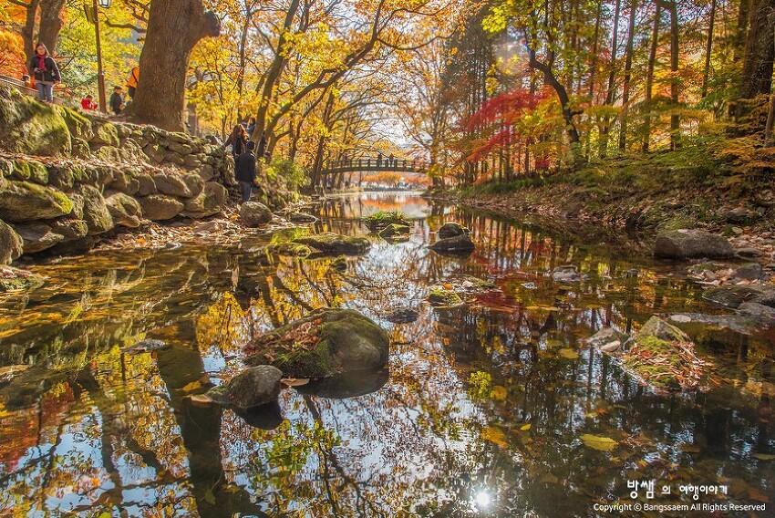 장성 백양사 단풍, 가을의 그 고운 색으로 가득한 풍경