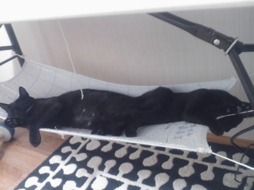위카와 잉크가 같이 자는 사진.