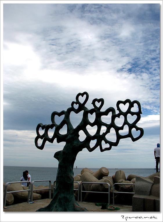 속초해수욕장 하트나무
