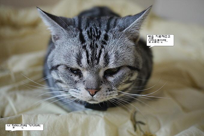 고양이 사진