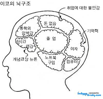 이코의 뇌 구조