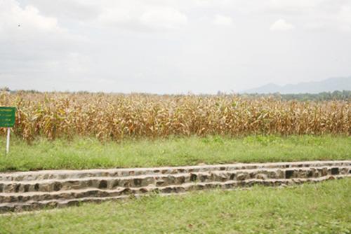 미얀마 Yazin 시험장