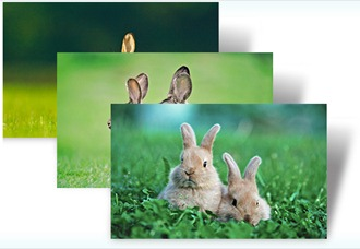 year_of_rabbit_theme