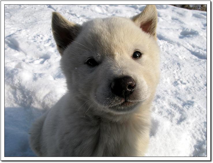 눈밭에서의 진이