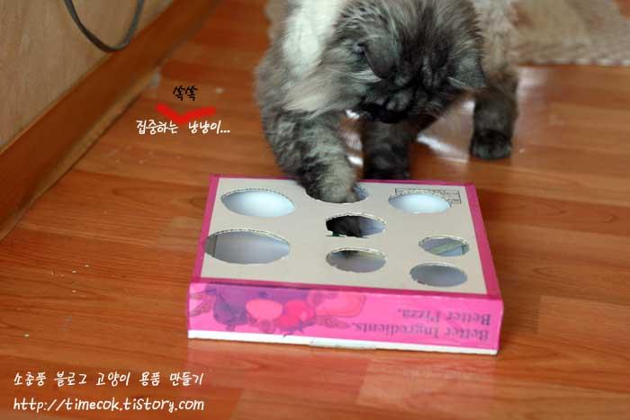 고양이 혼자 놀수 있는 장난감 뭐가 있을까?