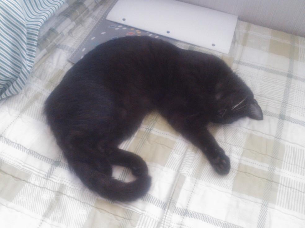 자고 있는 위카