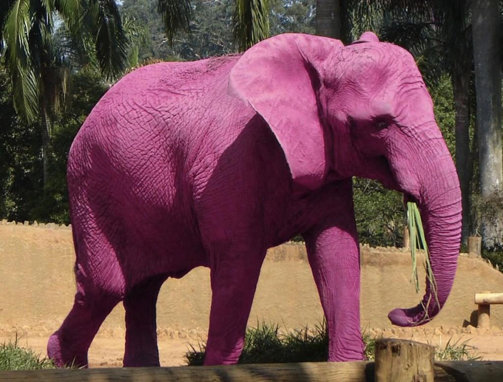 잡다지식 분홍코끼리 보신 적 있나요
