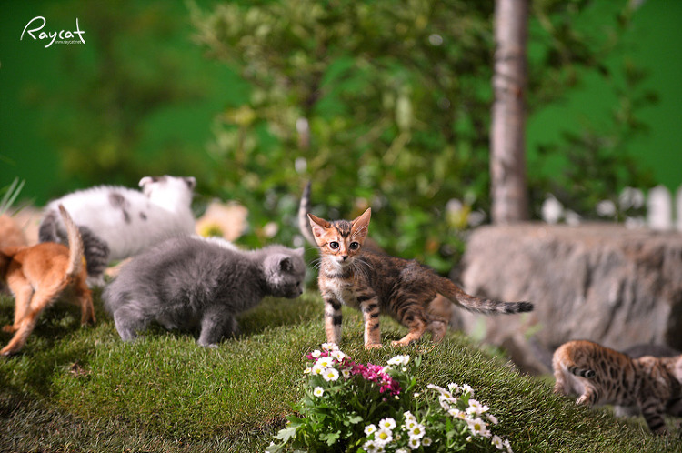 세트장 위의 고양이들