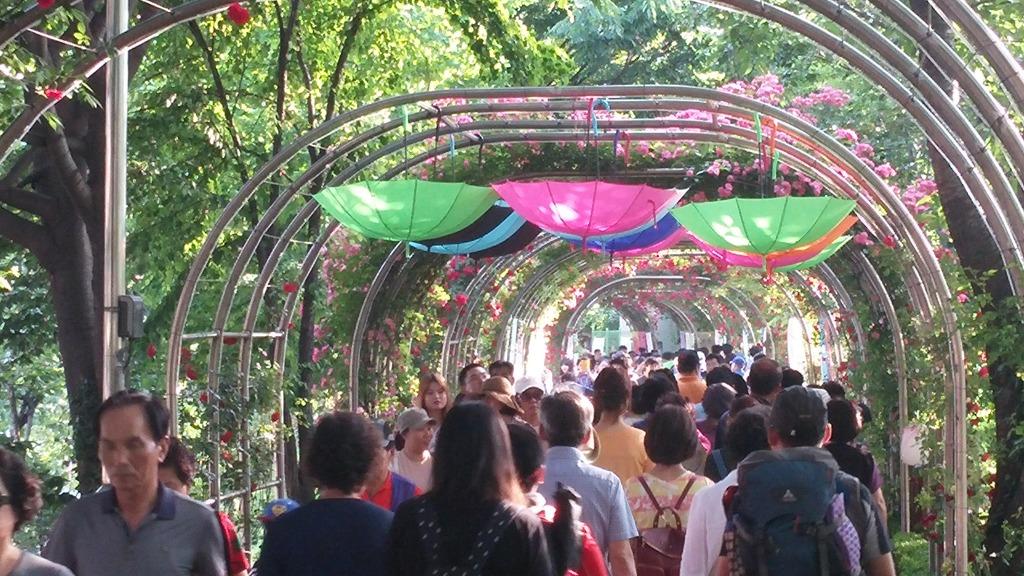 [서울 축제] 중랑천 장미축제 - 북적북적하지만 한번은 가볼만해용
