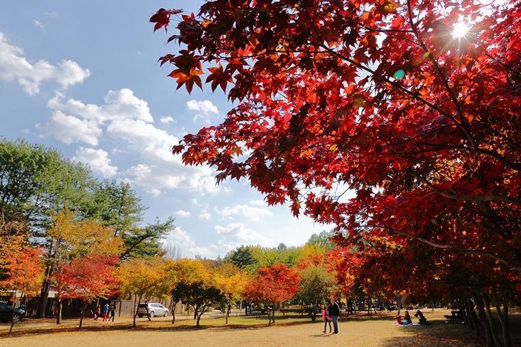 가을단풍스팟 단풍놀이장소 가을여행지추천