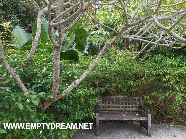 싱가포르 여행 - 보타닉 가든 Botanic Gardens