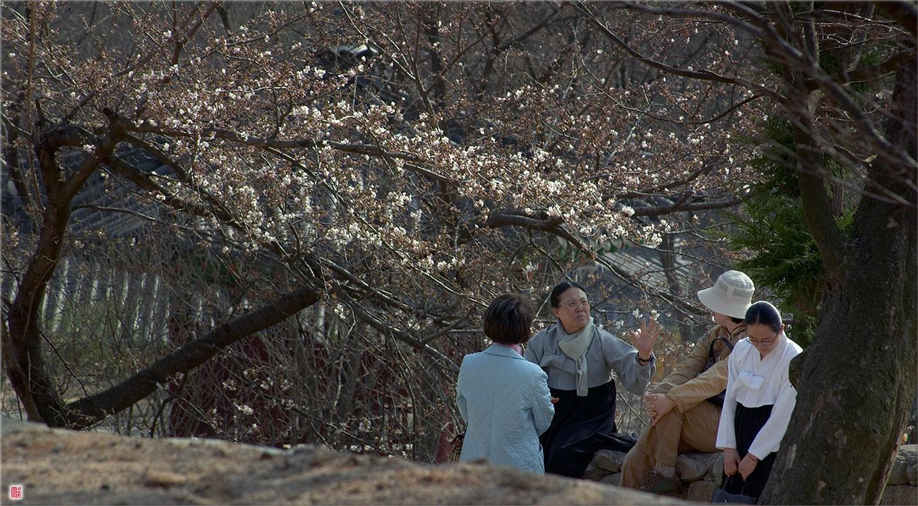 [Canon300D] 벚꽃나무 아래서는... 지금