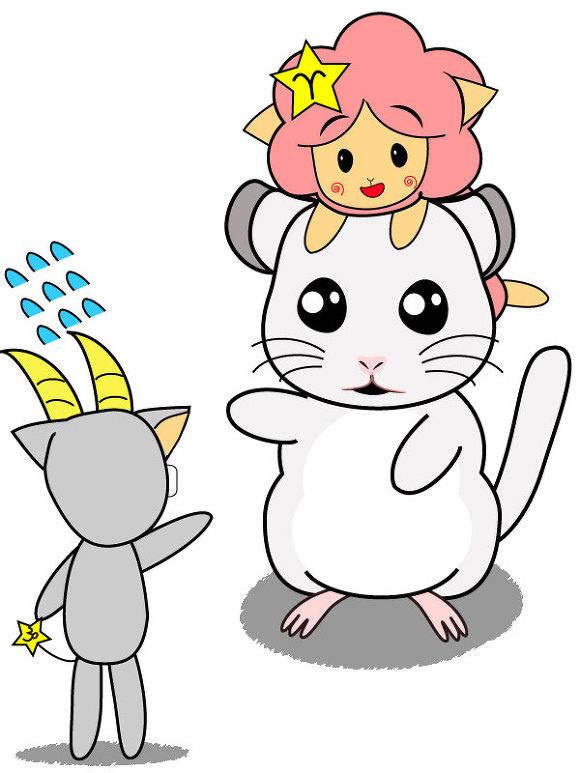 멜로의 반려 쥐 친칠라 꾹꾹이
