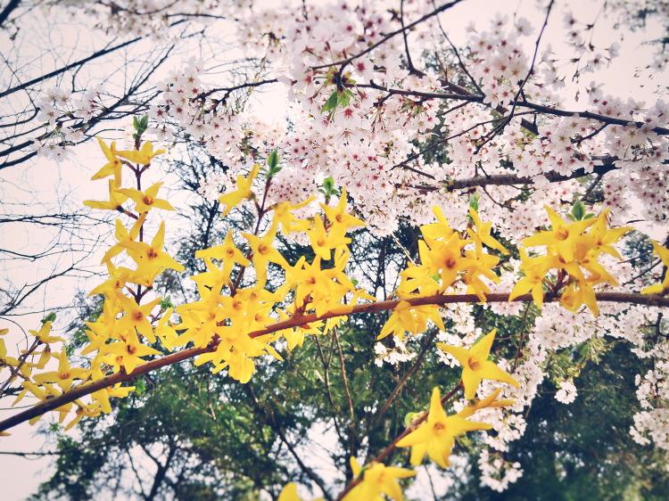 봄과 봄이 만났으니, 봄봄!