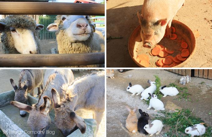 양, 돼지, 당나귀, 토끼가 먹이를 먹는 중입니다.
