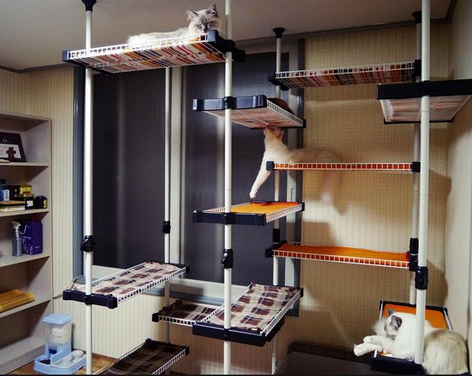 캣타워 대신, 캣행거, 캣기둥, 고양이 타워, 고양이 용품, 고양이 키우기, 고양이,