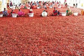 Chili pepper - Wikipedia