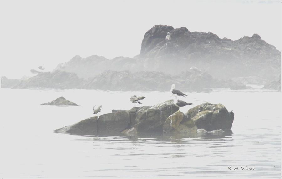 물안개 낀 바다풍경