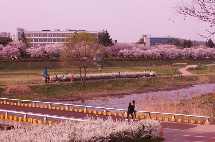 갑천변 봄나들이