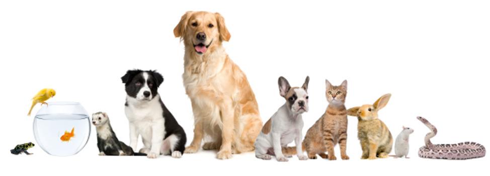 Uf Service Dogs