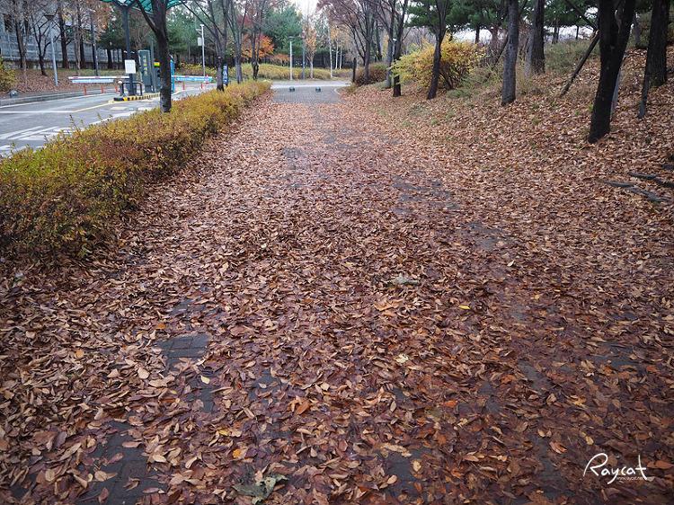 낙엽 떨어진 서울숲 입구