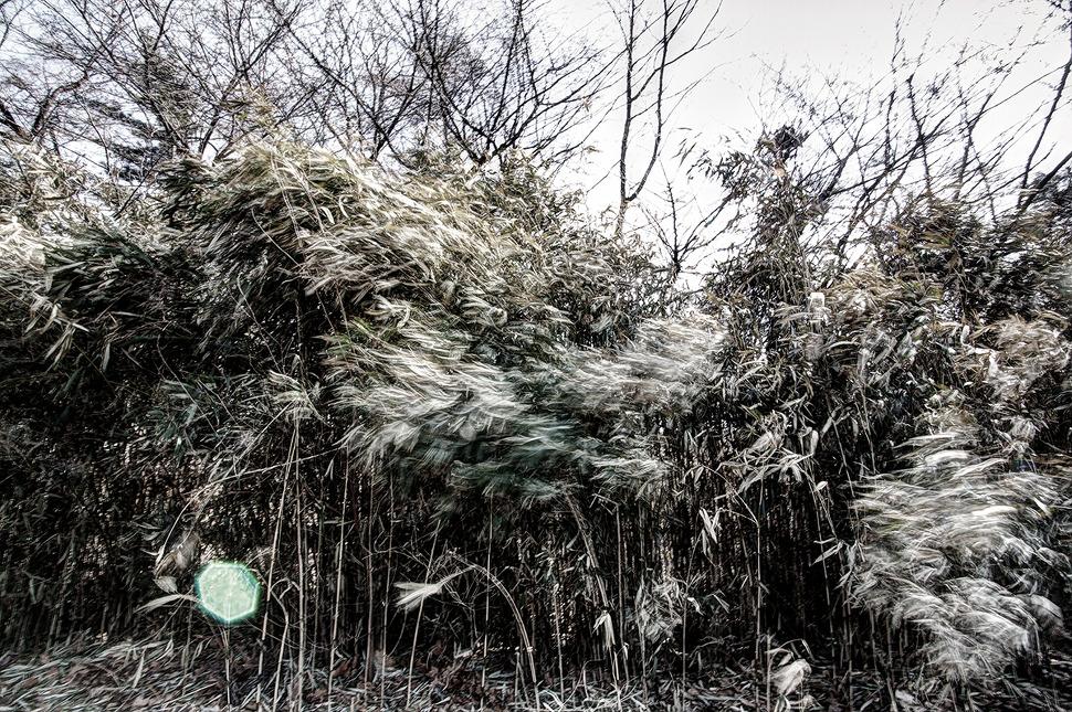 바람불던날 대나무가 바람에 흔들리는 모습을 장노출로 촬영하였다.