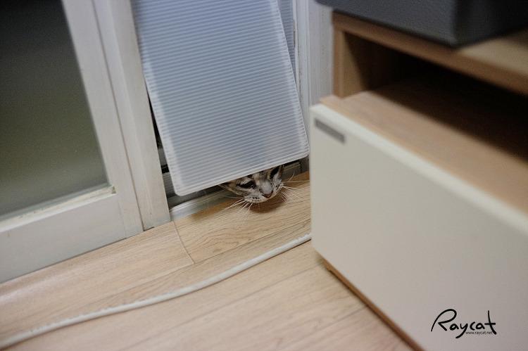 고양이 베란다 출입문