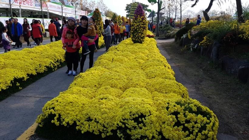 국화꽃축제
