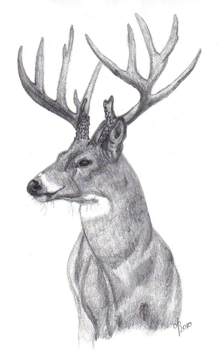 for Whitetail deer tattoos