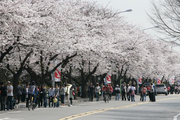 삼성물산 건설부문 봄꽃축제3