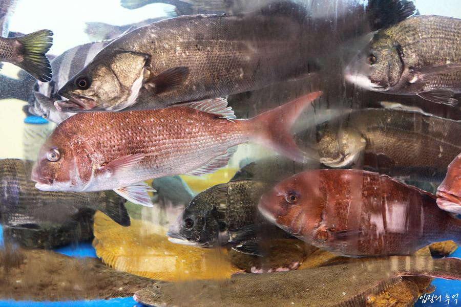 피서철 여름 생선회, 이것만은 알고 먹자