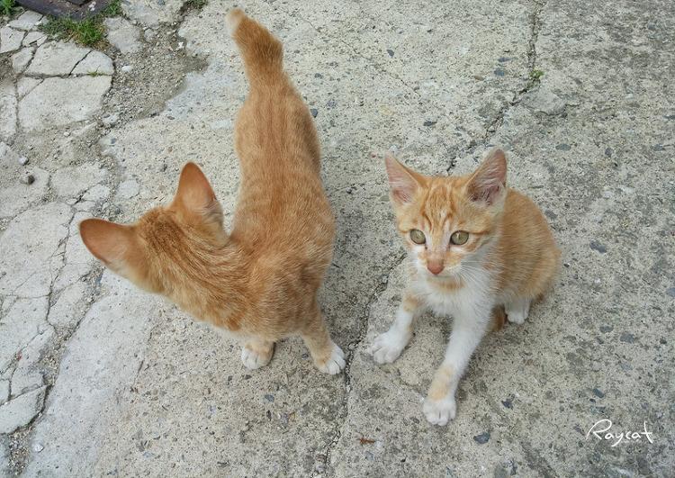 장난꾸러기 고양이들