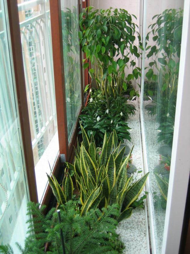 더숲의 정원이야기 :: [더숲 실내조경] 아파트 베란다 여유공간을 ...